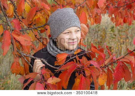 Boy Hiding The Leaves Of A Tree, Children Playing Hide And Seek In The Park. Hiding Behind The Tree