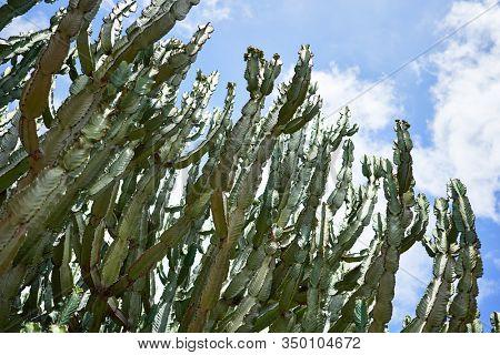 Close up of succulent green cactus at botanical garden