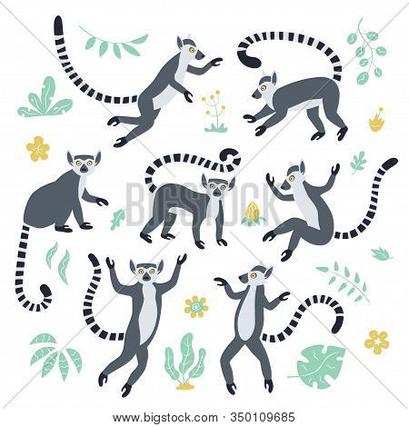 Cute Funny Ring-tailed Lemurs And Tropical Plants. Exotic Lemur Catta. Set Of Vector Illustrations I