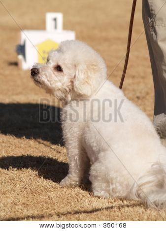 Puppy Waitign