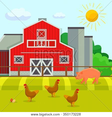 Chickens And Pig Walking On Yard Of Farmstead Buildings Vector Illustration Cartoon Flat Style. Anim
