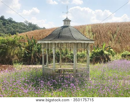 Vintage White Wood Pavilion In Violet Verbena Field For Relaxation