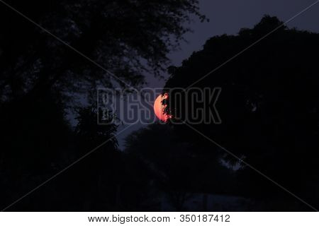 Close Up Of A Big Round Sun Setting Back Tree In Forest In The Evening Against Blue Sky, Sunset On E