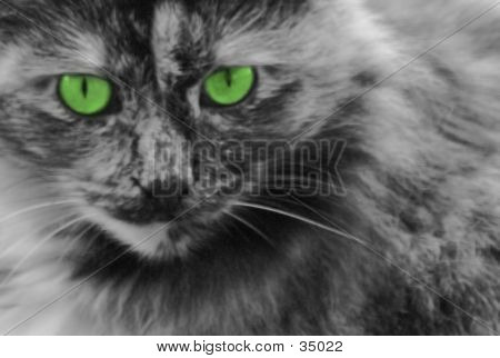 Cat Green Eyes - blurry at full size, ok at small poster