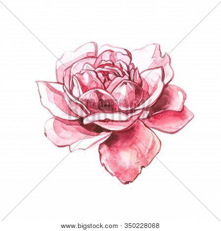 Watercolor Pink Wild Roses. Wild Flower Set Isolated On White. Botanical Watercolor Illustration, Ro