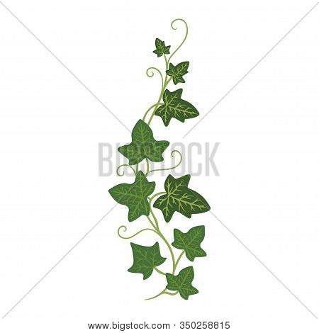 Ivy Sprout Icon, Woody Evergreen Eurasian Climbing Plant