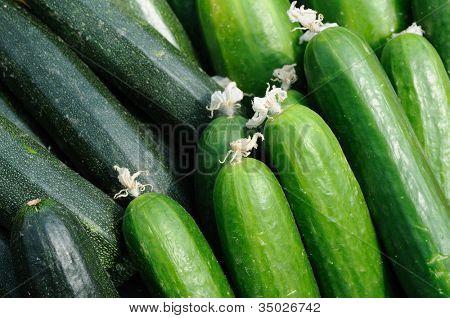 Cucumber and zucchini close up