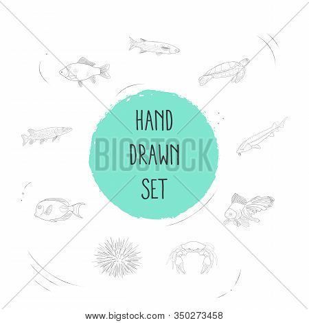Set Of Seafood Icons Line Style Symbols With Mullet, Marine Brush Fish, Sea Turtle And Other Icons F