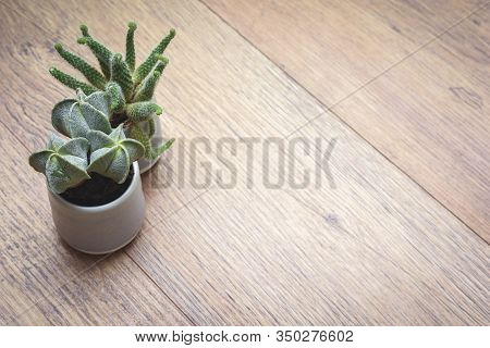 Office Or Home Office Desk With Decorative Plants And Cactus On Wooden Table