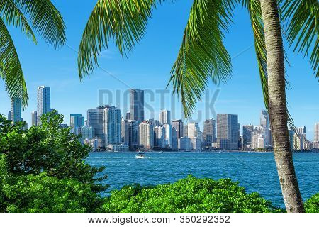 The Skyline Of Miami Behind Palm Trees, Florida