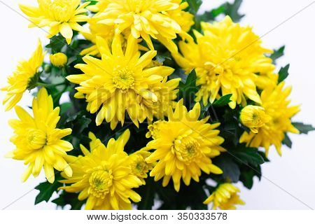 Bouquet Of Yellow Chrysanthemums On A White Background. Yellow Flowers On A White Background. Flower