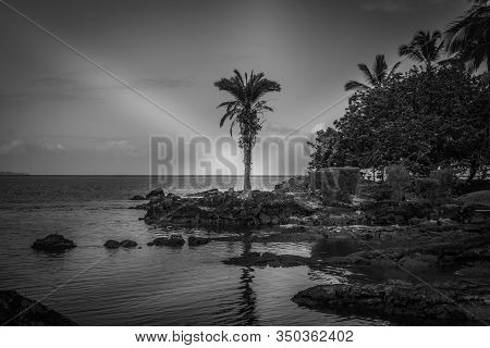 Hilo, Hawaii, Usa. - January 9, 2012: Black And White Photo Of Ocean Coastline With Rocks And Trees