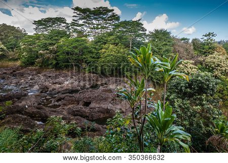 Hilo, Hawaii, Usa. - January 9, 2012: Semi-dry Brown Rock River Bed Above Rainbow Falls Show Only A