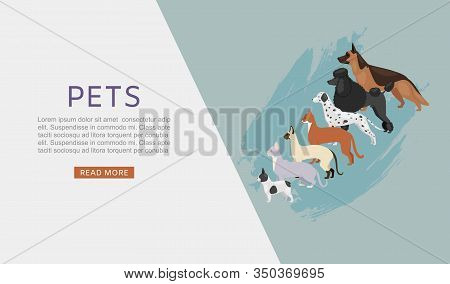 Pets Shop Web Banner With Different Dogs And Cats, Petshop Or Veterinary Service And Food Vector Ill