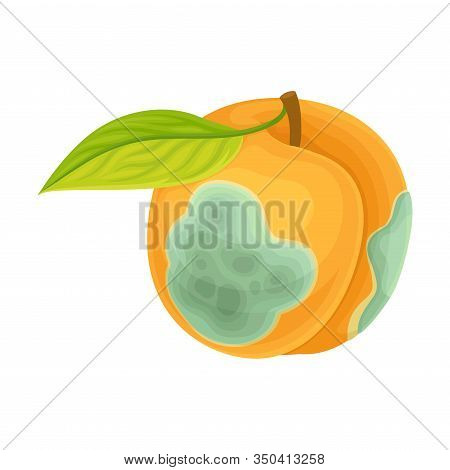 Spoiled And Rotten Peach Fruit With Skin Covered With Stinky Rot Vector Illustration