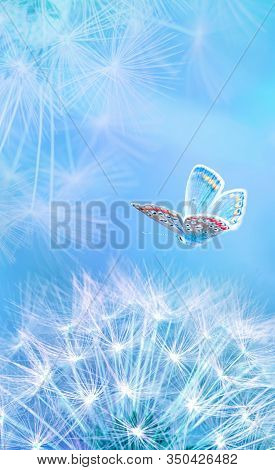 Beautiful Dandelion Seeds Closeup Blowing And Butterfly On Light Blue Vertical Background. Soft Past