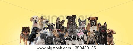 group of different animals sticking out tongue, panting, licking nose and wearing bowtie on yellow background