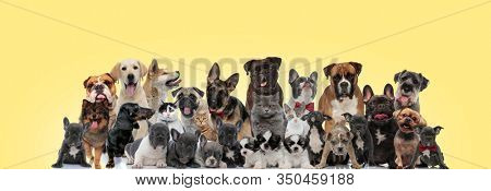 team of different animals licking nose, sticking out tongue and wearing bowtie on yellow background