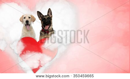 In love Labrador Retriever and German Shepherd puppy wearing bowtie, panting sitting on a love cloud behind a big heart on red background