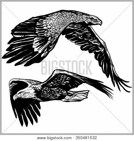 Set Of Soaring Eagles, Eagle In Flight Vector Illustration Isolated On White