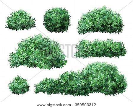 Realistic Garden Shrub. Nature Green Seasonal Bush, Boxwood, Floral Branches And Leaves, Tree Crown
