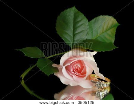 Diamond Engagement Ring & Pink Rose Still Life