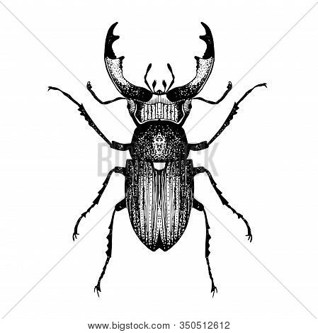 Hand Drawn Sketch Of Beetle With Horns. Vector Illustration Of Insect. Black And White Entomological