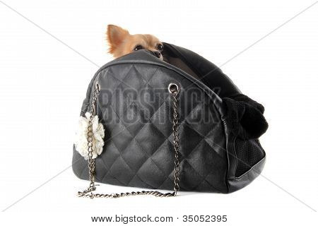 poster of travel bag with chihuahua in front of white background