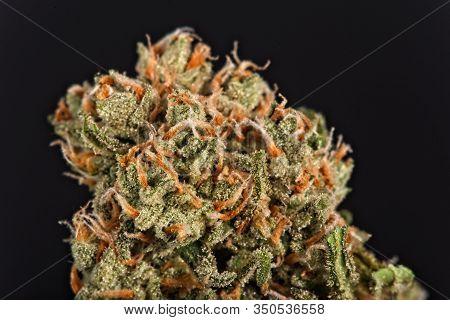 Beautiful Contemporary Dry Cannabis Bud