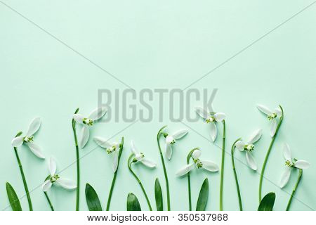 Spring snowdrop flowers on light green background. Snowdrops, a sign of spring.