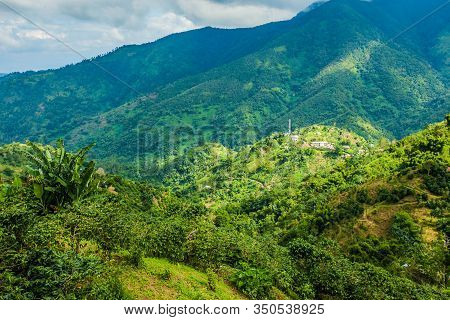 Blue Mountains Of Jamaica Coffee Growth Place
