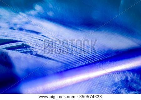 Pen Lines. Blue Feather On A Shiny Background. Macrocosm Balance