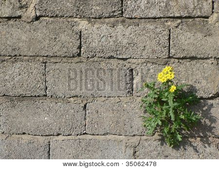 Flowers grow on concrete wall