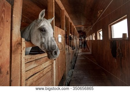 Wooden Stable By Horses. Horse Head Close Up In A Rural Stable