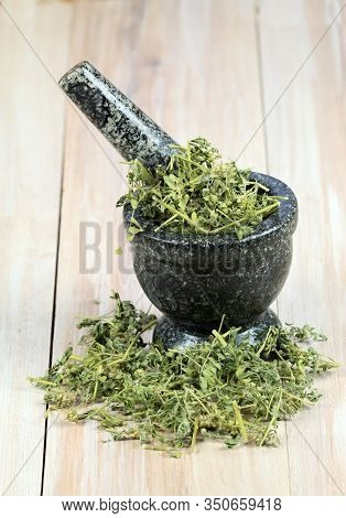 Dried Tribulus Terrestris In The Mortar.  Curative Herb Tribulus Terrestris And  Its Seeds Called De