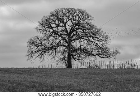 Spooky, Leafless Tree And Barbed Wire Fence Silhouetted On The Horizon With Gloomy, Overcast Skies I