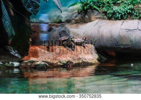 Hawksbill Turtle Eretmochelys Imbricata On The Beach Near The Water