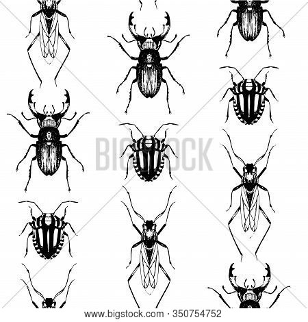 Seamless Pattern With Hand Drawn Sketches Of Insects. Vector Illustration Of Bugs And Beetles In Rep