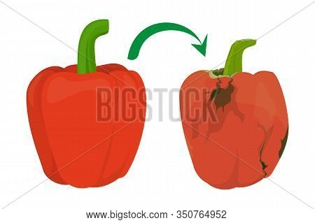 Red Shiny Bell Pepper Become Rotten Vector Isolated. Vegetable Ingredient Rotting. Tasty Delicious F