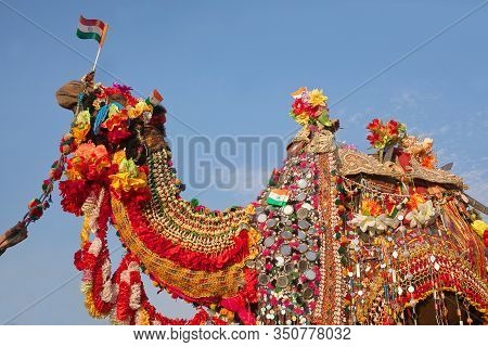 Beautiful Amusing Decorated Camel On Bikaner Camel Festival In Rajasthan, India. The Camel Festival