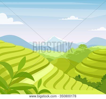 Tea Plantation Flat Vector Illustration. Asia Countryside Farmland Fields. Asian Rural Meadow And Hi