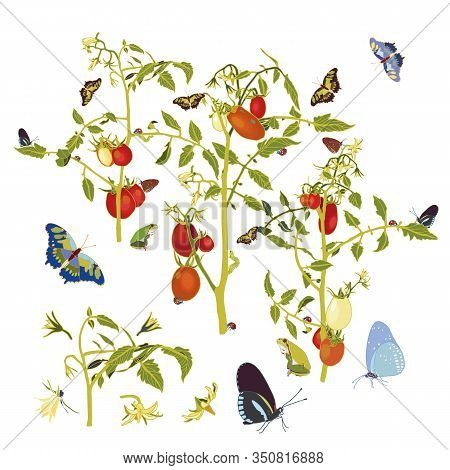 Vector Realistic Tomato Garden Illustration Set With Tomato Plant And Butterfly. Beautiful Summer De