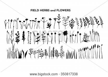 Field Plants Bundle. Meadow Flowers Set. Grass And Weed Collection. Branches And Twig. Botanical Dra