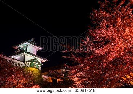 Red Sakura Light Up At Night Time, Sakura In Front Kanazawa Castle Turn To Red Color At Night Sky Ba