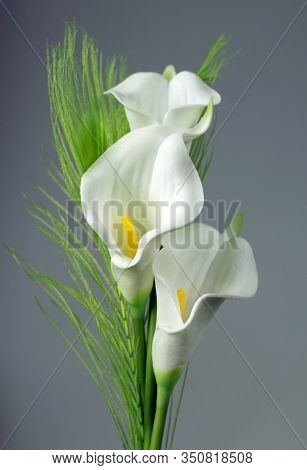 White calla lilies. St. Valentine's Day. Beautiful white flowers