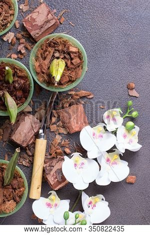 Preparing For Planting An Orchid. Garden Tools On A Grey Background. Home Gardening. Top View.