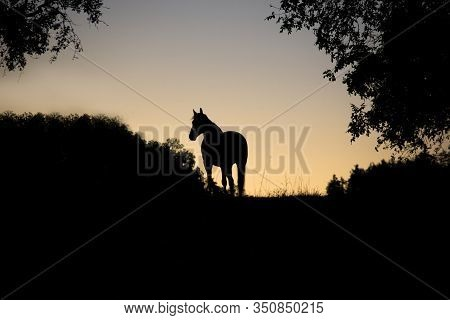 Horse Backlight Silhouette In Sunset, Beautiful Free Standing Horse In Sun