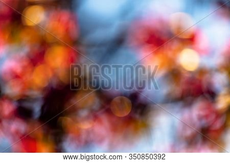 Abstract Nature Blur. Bokeh Of Blossom And Foliage In Spring. Bright Backlit Background
