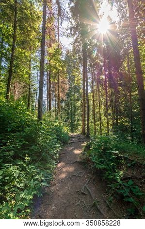 Forest Trail On The Hillside. Beautiful Nature Scenery With Beech Trees On A Sunny Day. Bright Sun T