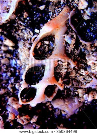 On Rocks Trippy Image Photo Free Trial Bigstock